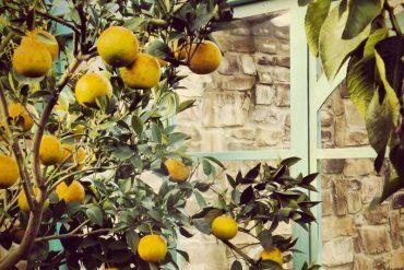 Colori di frutta - dentro le nostre serre, orangerie - gh lazzerini, toscana